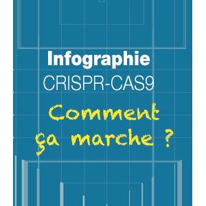 Infographie CRISPR-Cas9