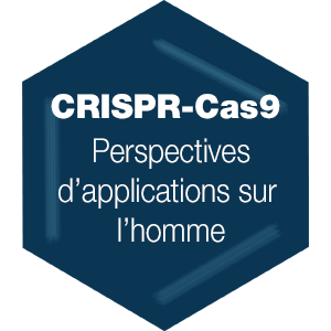 CRISPR-Cas9 : perspectives d'application sur l'homme