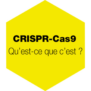 CRISPR-Cas9 : qu'est ce que c'est ?